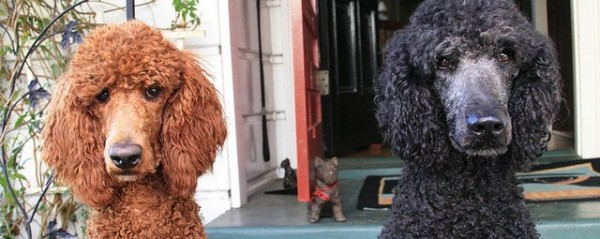 Day care for dogs and the output gap